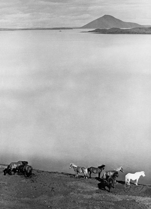 Alfred Ehrhardt, Islandpferde am Mývatn, Nordisland, 1938-39, © bpk / Alfred Ehrhardt Stiftung