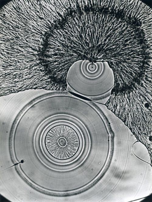 Alfred Ehrhardt, Vitamin C, ca. 180-fach vergrößert, Mikrofotografie, 1939, © Alfred Ehrhardt Stiftung