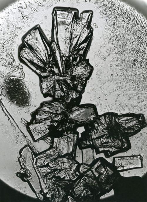 Alfred Ehrhardt, Vitamin C, ca. 500-fach vergrößert, Mikrofotografie, 1939, © Alfred Ehrhardt Stiftung